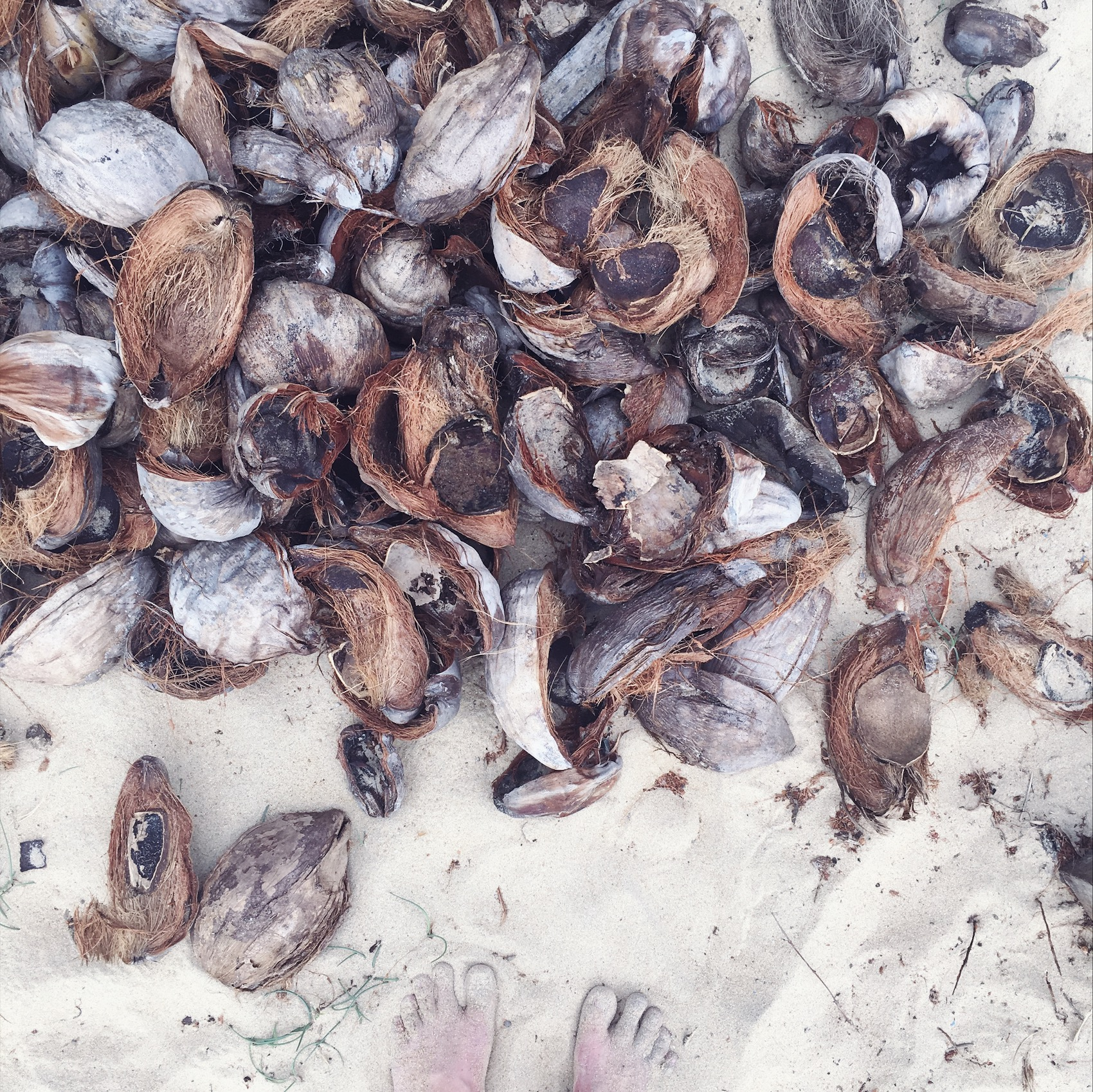 Coconut husks in white sand